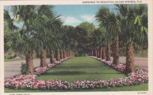 Florida Silver Springs Entrance Curteich