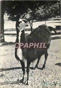 Modern Postcard Alpaca Lama Advertisement Transfusine