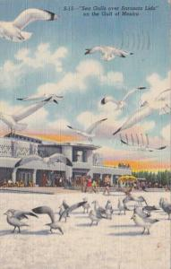 Florida Sarasota Sea Gulls Over Sarasota Lido 1948 Curteich