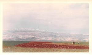 Ablah, Lebanon Postcard, Carte Postale Looking North West Toward Mountains Ab...