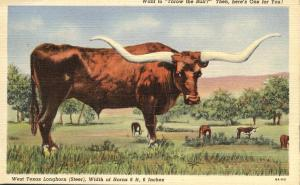 West Texas Longhorn Steer - 9 Feet 6 Inches - pm 1943 - Linen