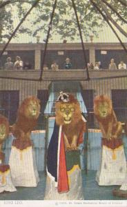 Missouri St Louis The Lion Show With King Leo St Louis Zoo