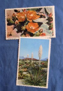 Desert Flowers Cactus Postcards Plants Flora Salifornia Succulents