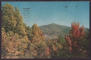 Fall In Virginia Postcard BIN