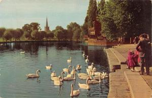 uk7986 swan holy trinity church stratford upon avon uk
