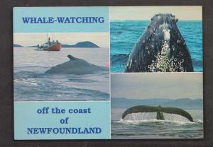 Whale Watching Off The Coast Of Newfoundland - Unused - Corner Creases