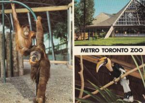 Orangutan Hornbill at Metro Toronto Zoo Canadian Postcard