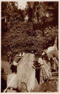 Ghana Gold Coast moving big tree Postcard