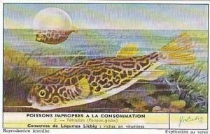 Liebig Vintage Trade Card 1959 Inedible Fish S1715 No 2 Tetrodon