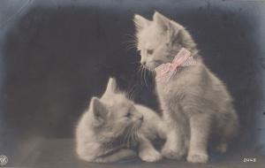 Cat Kitten With REAL PINK RIBBON Antique Postcard