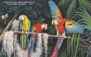 Florida Miami Beautiful Macaws At Parrot Jungle