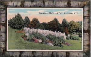 New York Rochester Bear Grass In Highland Park