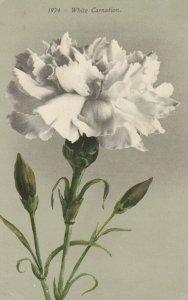 White Carnation Flower , 00-10s