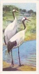 Brooke Bond Vintage Trade Card Wildlife In Danger 1963 No 32 Manchurian Or Ja...