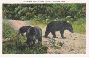 Tennessee Smoky Mountains Black Bear Natives