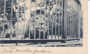 TUCK #524; Zoo, The Lion in a cage, 00-10s