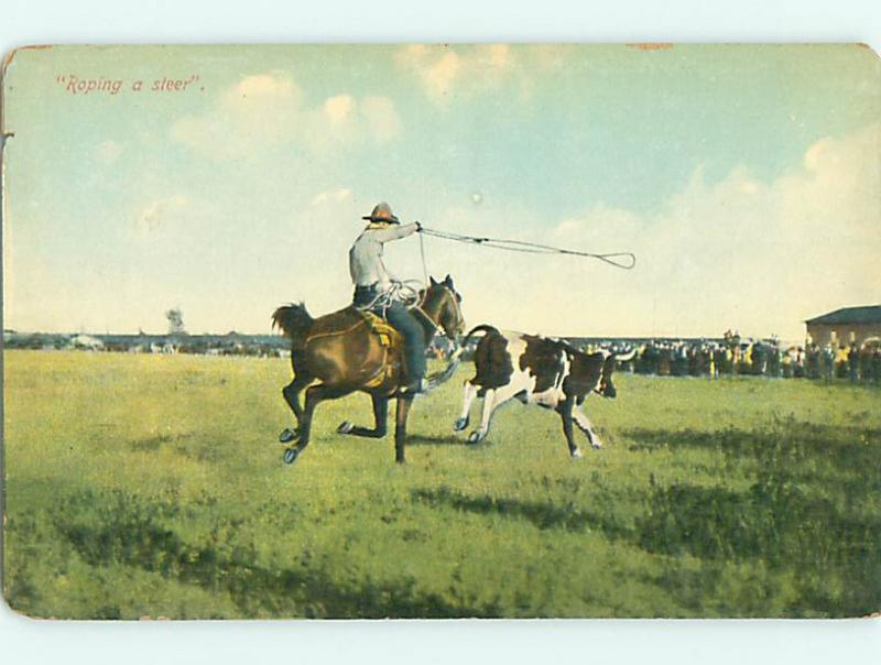 Unused Divided-Back COWBOY ON HORSE ROPES COW Published In Cheyenne WY v4316