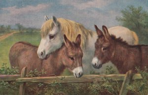 Cute Donkeys and Pony Postcard Vintage From England