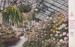 Illinois Chicago Interior Lincoln Park Conservatory 1910
