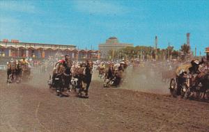Canada Calgary Stampede Chuckwagon Races