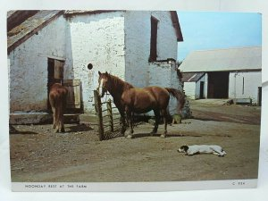 Vintage Postcard Trekking Ponies and Dog Relaxing in the Sun at Blwch Mawr Farm