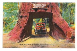 California Underwood Park Drive thru Chandelier Redwood Tree Vntg Linen Postcard