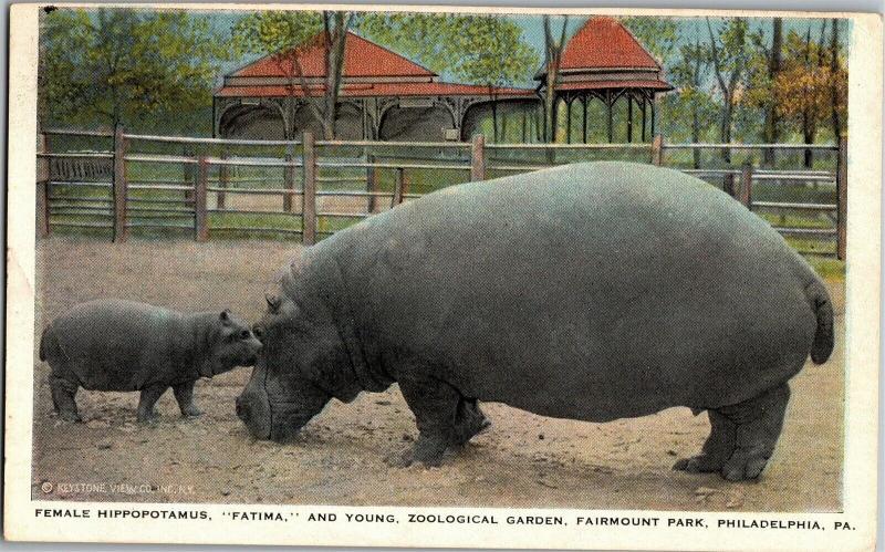 Hippopotamus Fatima and Calf Fairmount Park Philadelphia PA Vintage Postcard N06