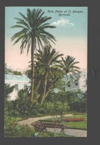 090309 BERMUDA Date Palms at St.Georges Vintage PC