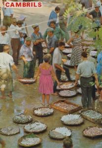 Tarragona Cambrils Street Fish Fishing Market Markets Spain Spanish Postcard