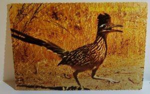 Vintage Postcard Road Runner Clown of the West desert bird Arizona 1977