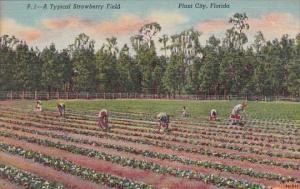 A Typical Strawberry Field Plant City Florida Curteich