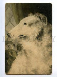 159620 Hunt BORZOI Portrait vintage color PC