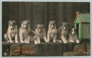 Color RPPC Must Be 7 Well-Behaved Collies, As None of Them Are In the Dog House