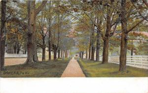 Orford New Hampshire~The Mall~White Fence on Right~Tall Trees along Path~c1905