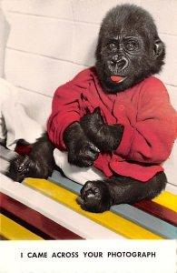 Baby Gorilla, double fold card, non postcard La Jolla, California, USA Monkey...
