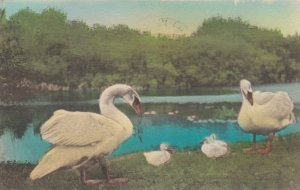 LILY DALE, New York, PU-1948; The Swan Family at Lily Dale Assembly
