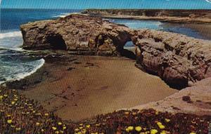 California Santa Cruz Natural Bridges State Park 1989