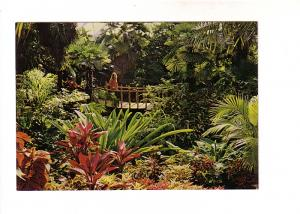 Interior, Cacti, Palms, Bloedel Conservatory, Vancouver British Columbia, Pho...