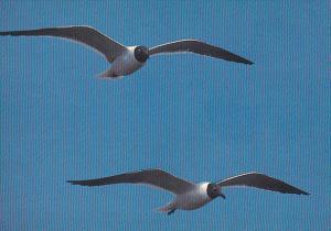 Match Pair Sea Gulls Myrtle Beach South Carolina