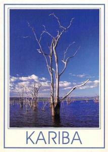 Zimbabwe Kariba Lake, Petrified Trees