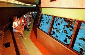 Postcard Glass Bottom Boat Inside Aquatorium Silver Springs Florida Unpost 1600