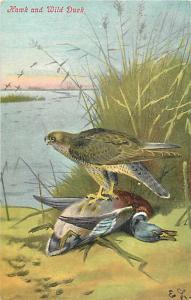Hawk and Wild Duck 1907 Divided Back Postcard