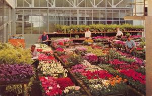 Postcard AALSMEER Flower Market Sampling of Potted Plants HOLLAND