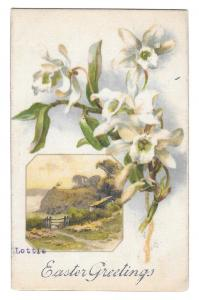Easter Greetings White Narcissus Country Scene Vintage 1908 Winsch Back Postcard