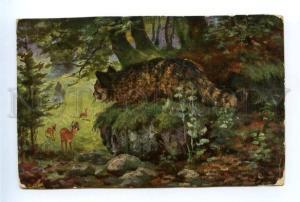 157155 DEER Hunt WILD CAT Vintage color PC
