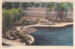 WASHINGTON D.C. , 30-40s ; Zoo animal ; Alligators