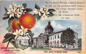 Orange Blossom, State Capitol Tallahassee, FL, USA Postcard Post Card Tallaha...