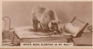 Baby Fox Wolf Who Is Sleeping In My Bed German RPC Cigarette Card
