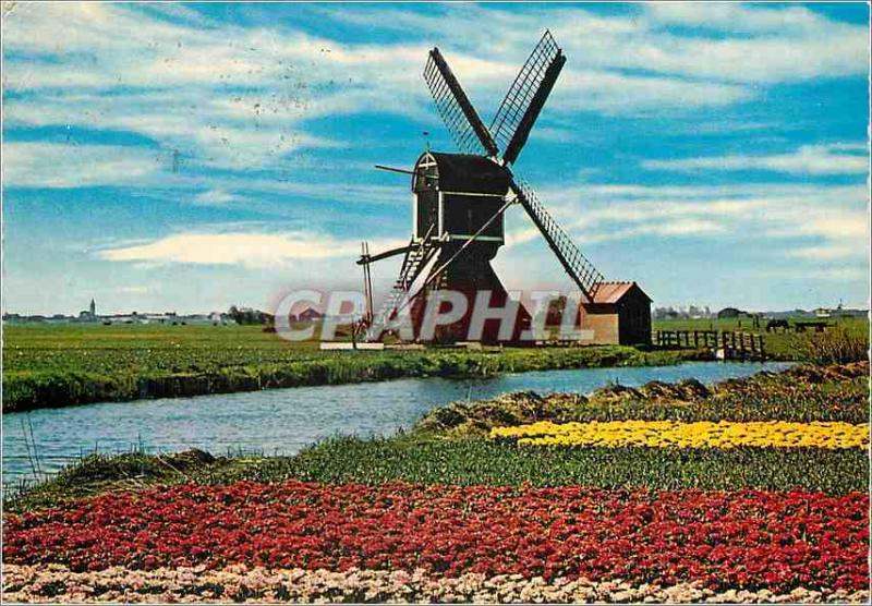 CPM Holland Land of Flowers and Windmill Moulin a vent