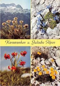 B31995 Sudost Alpine flora karawanken   austria